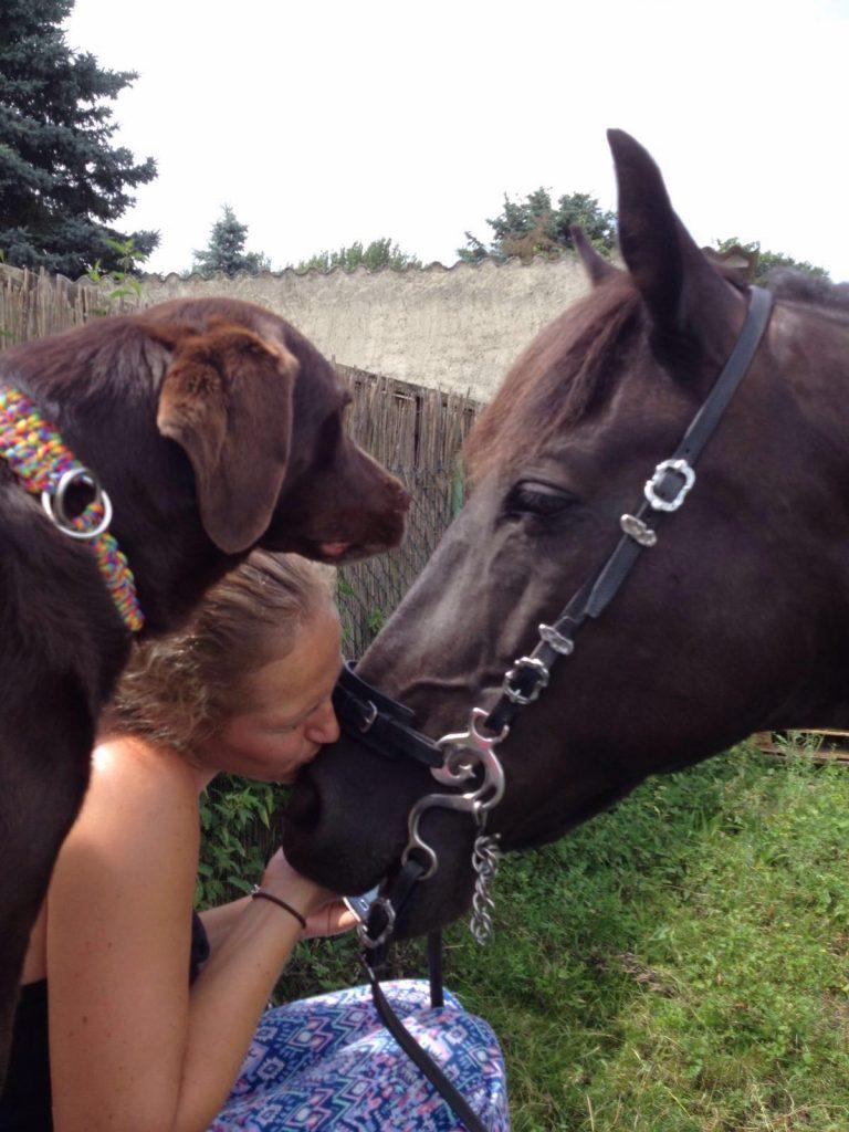 Jenny Hund Pferd 2